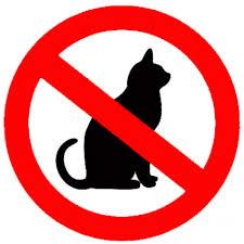 No utilitzar en gats